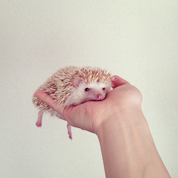 hedgehog-instagram-2