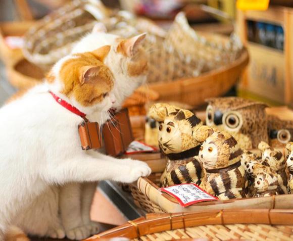 cat-japan-guide-3
