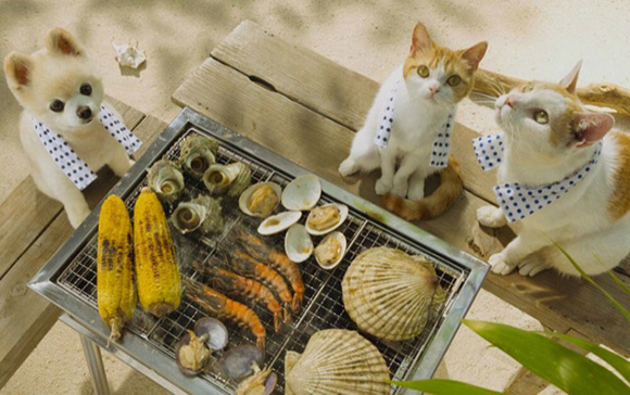 cat-japan-guide-7