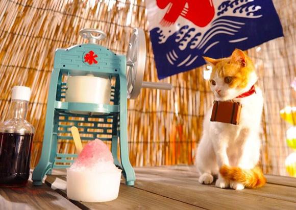 cat-japan-guide-4