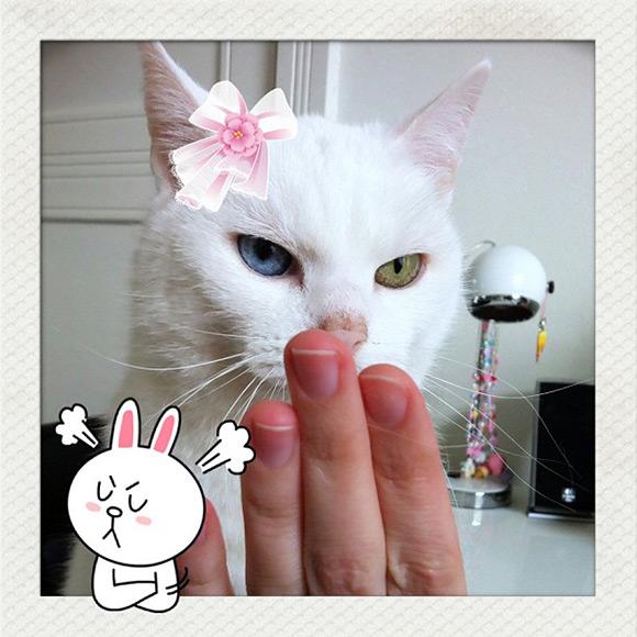 Cute Photo app iphone - Line Camera