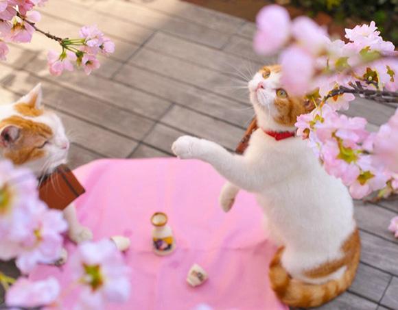 cat-japan-guide-5