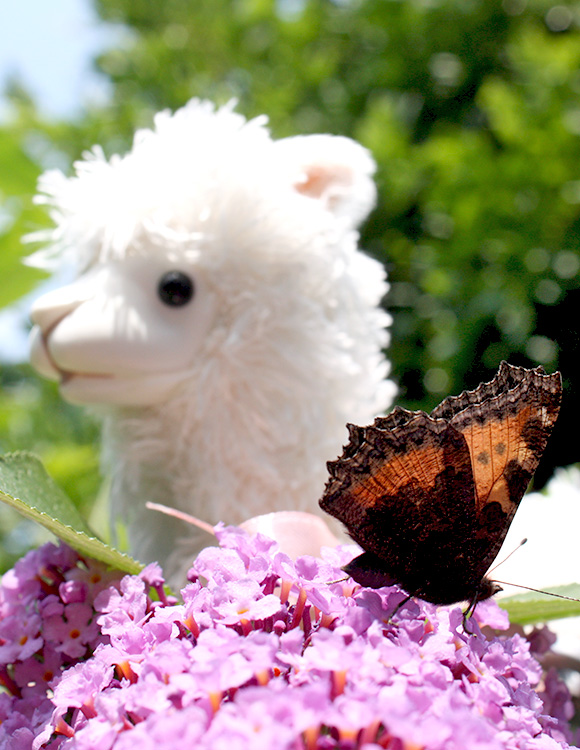 Alpaca Wind Up Toy