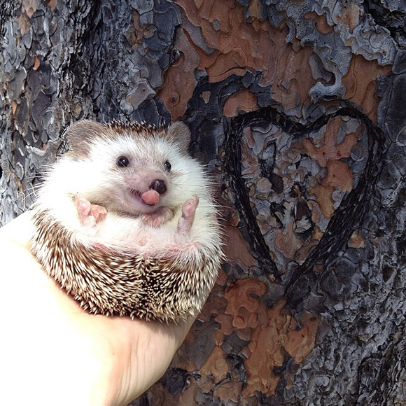 hedgehog-instagram-8