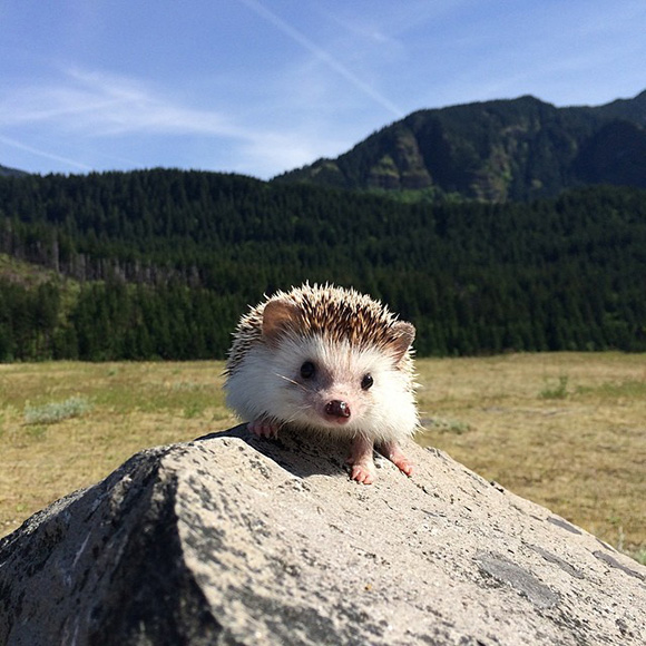 hedgehog-instagram-7