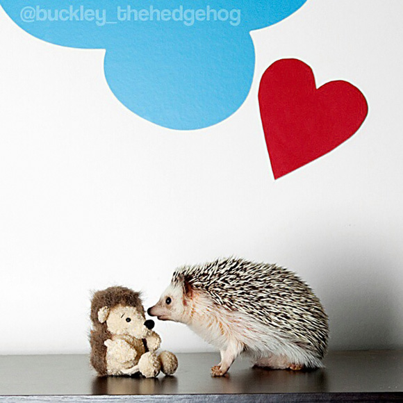 hedgehog-instagram-4