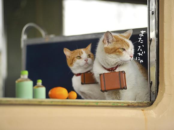 cat-japan-guide-1