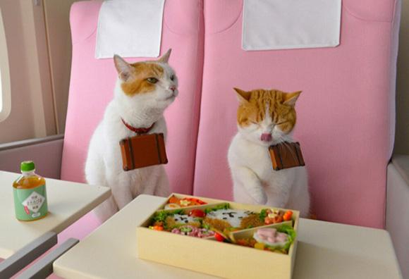 cat-japan-guide-6