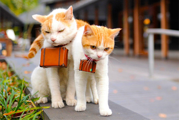 cat-japan-guide-10