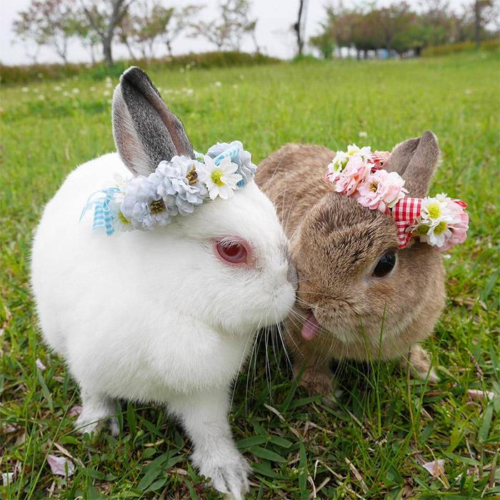 instagram-bunnies