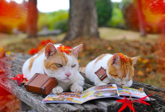 cat-japan-guide-11