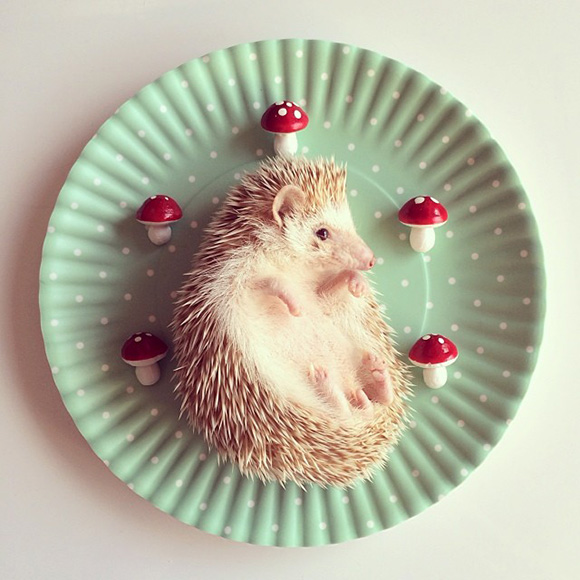 hedgehog-instagram-1